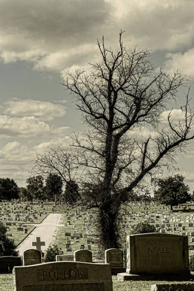 Photograph - My Grave Kingdom by Sharon Popek