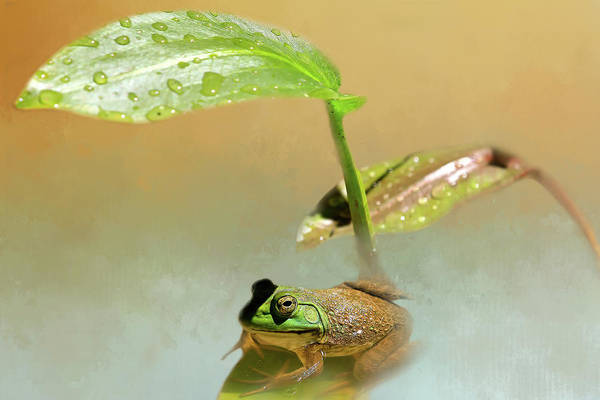 Bullfrog Photograph - My Green Sunbrella by Donna Kennedy