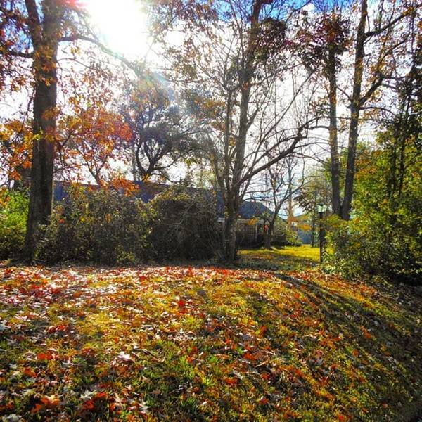 Photograph - My Home In Autumn, As Scene From The by Cheray Dillon