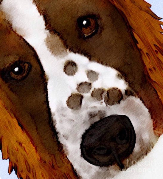 Welsh Springer Spaniel Painting - My Little Welsh Springer by Karen Harding