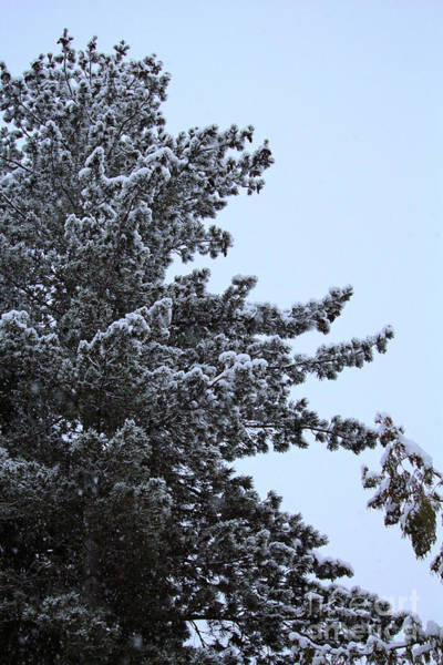 Photograph - My Little White Christmas 10 by Victor K