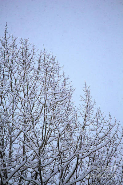 Photograph - My Little White Christmas 2 by Victor K