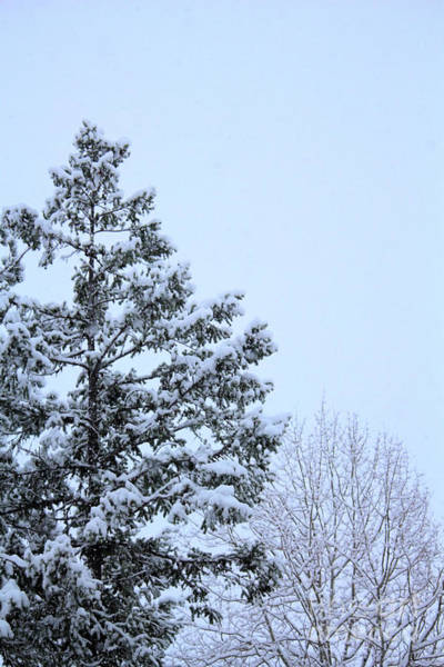 Photograph - My Little White Christmas 5 by Victor K