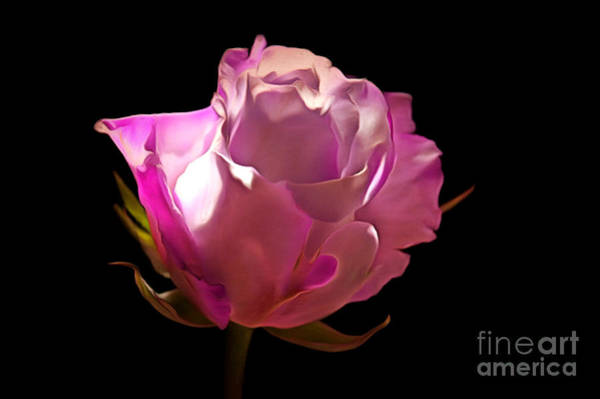 Exquisite Photograph - My Pink Valentine by Krissy Katsimbras