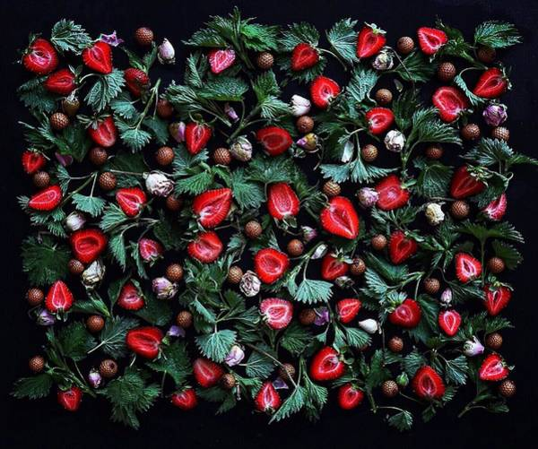 Photograph - My Real Strawberry Patch by Sarah Phillips