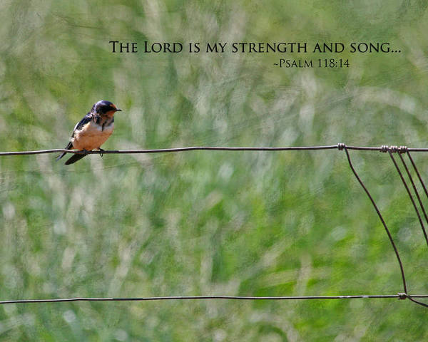Scripture Photograph - My Strength by Bonnie Bruno