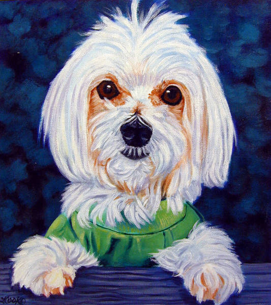 Wall Art - Painting - My Sweater - Maltese Dog by Lyn Cook