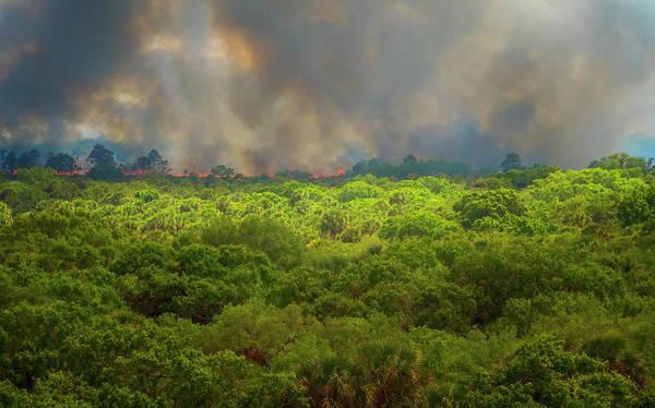 Photograph - Myakka River Burn by Tom Singleton