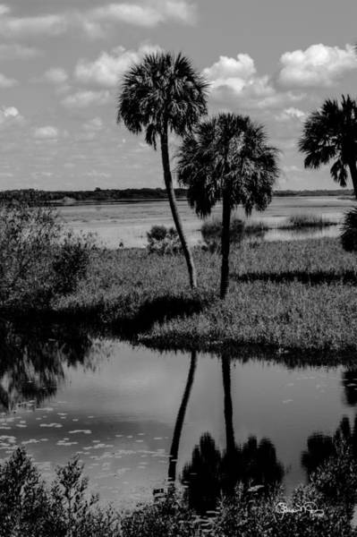 Photograph - Myakka River Reflections by Susan Molnar