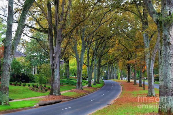 Photograph - Myers Park by Jill Lang