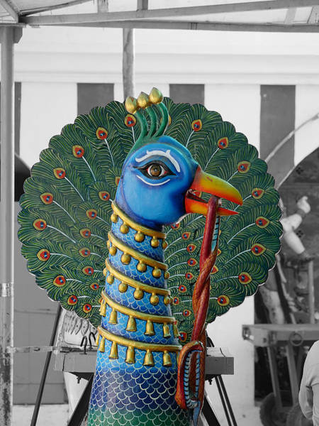 Photograph - Mylapore Peacock by Richard Reeve