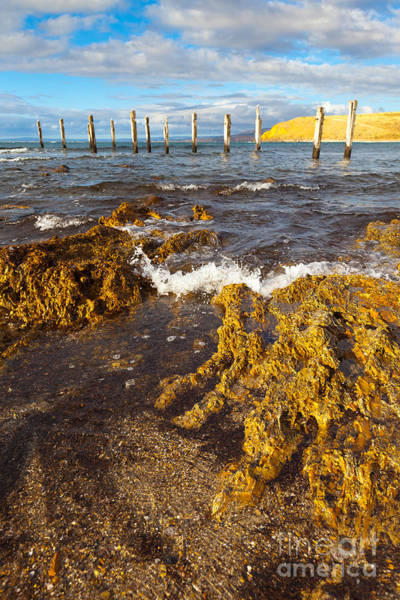 Wall Art - Photograph - Myponga Beach Jetty Ruins by Bill  Robinson