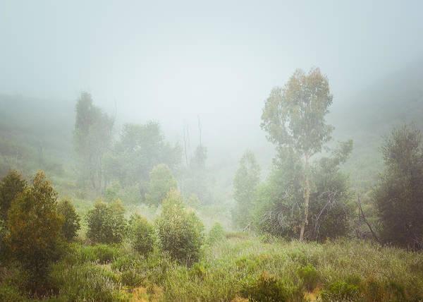 Photograph - Myrtle Mystery by Alexander Kunz