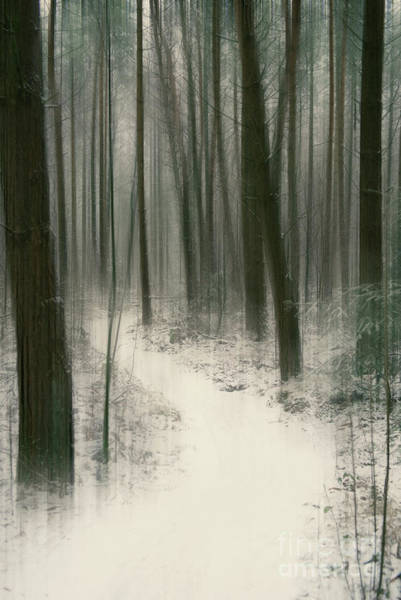 Photograph - Mysteries Of The Forest by David Lichtneker