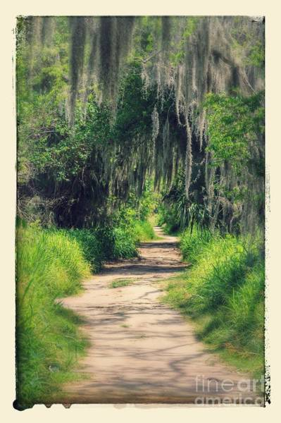 Alligator Alley Photograph - Mysterious Florida Path by Carol Groenen