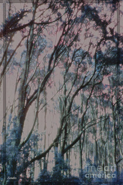Photograph - Mysterious Forest by Eena Bo