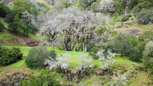 Photograph - Mysterious Landscape In Sonoma County by Charlene Mitchell