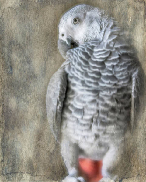 Photograph - Mysterious Parrot by Jennifer Grossnickle