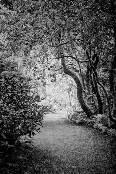 Photograph - Mysterious Pathway by Priya Ghose