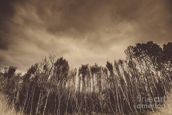 Photograph - Mysterious Scary Forest by Jorgo Photography - Wall Art Gallery