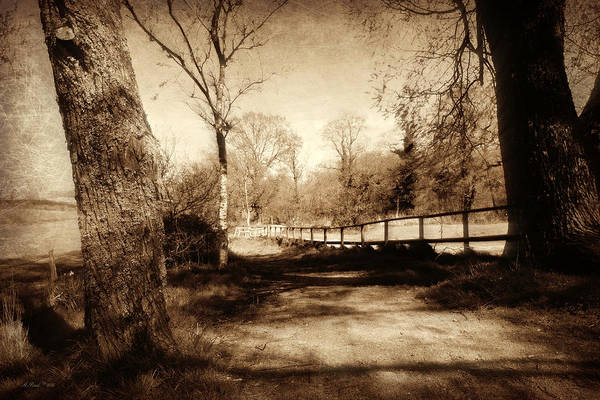 Wall Art - Photograph - Mysterious Woodland by Andrew Read