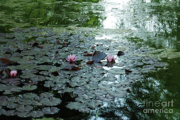 Photograph - Mysteriouse Pond And Water Lilies by Marina Usmanskaya