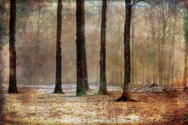 Photograph - Mystery Forest by Randi Grace Nilsberg