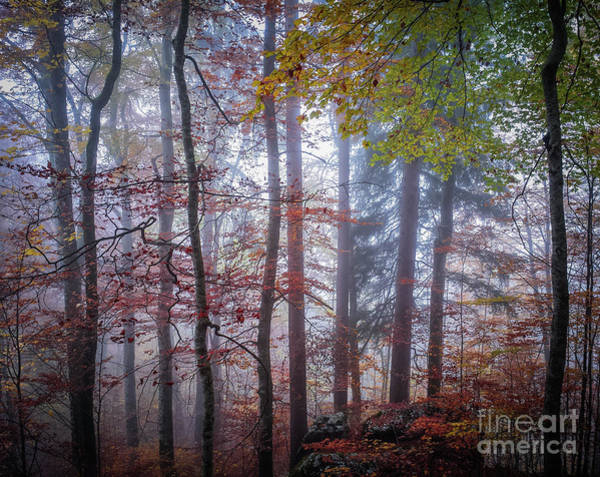 Wall Art - Photograph - Mystery In Fog by Elena Elisseeva