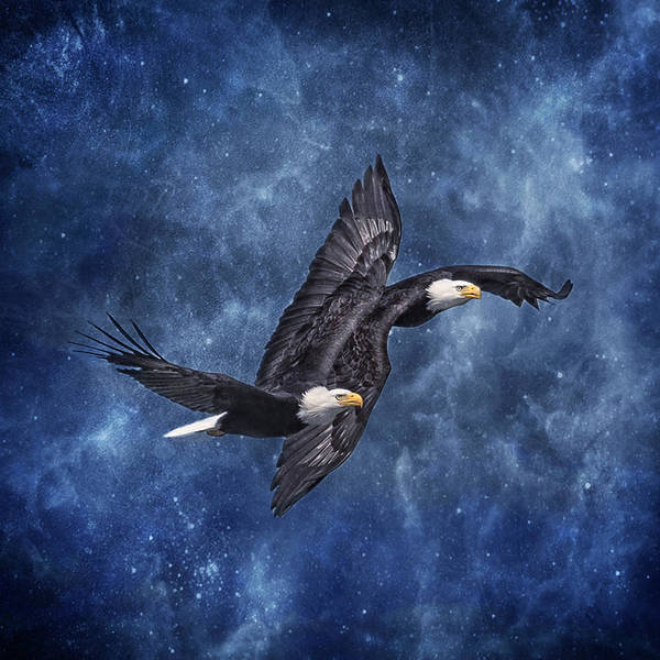 Photograph - Mystic Eagles Tandeml Flight by Wes and Dotty Weber