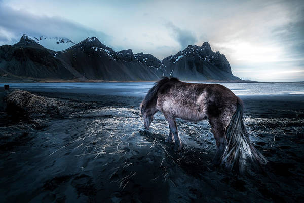Atlantic Ocean Photograph - Mystic Icelandic Horse by Larry Marshall