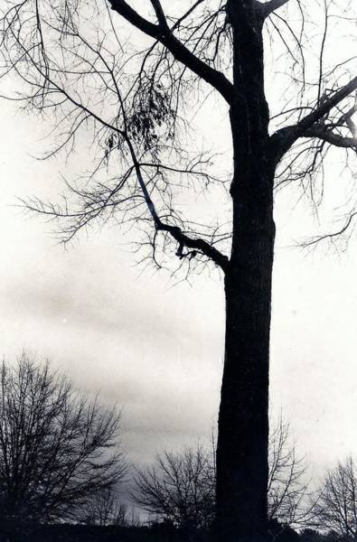 Photograph - Mystic Tree by Denise F Fulmer