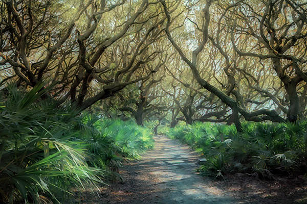 Photograph - Mystical Angel Oaks  by Debra and Dave Vanderlaan