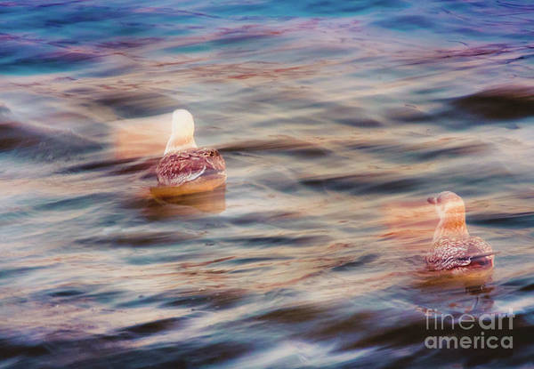 Photograph - Mystical Gulls by Marina Usmanskaya
