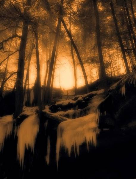 Photograph - Mystical Morning Light In The Forest by Dan Sproul