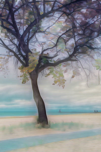 Photograph - Mystical Tree At The Lake by Debra and Dave Vanderlaan