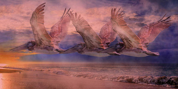Brown Pelicans Photograph - Mystical Trio by Betsy Knapp