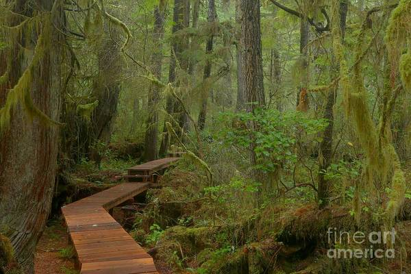 Photograph - Mystical Willobrae Rainforest by Adam Jewell