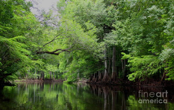Mystical Withlacoochee River Art Print