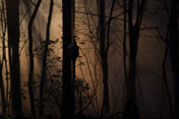 Crossville Wall Art - Photograph - Mystical Woods by Douglas Barnett