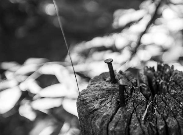 Photograph - Nails by Robert McKay Jones