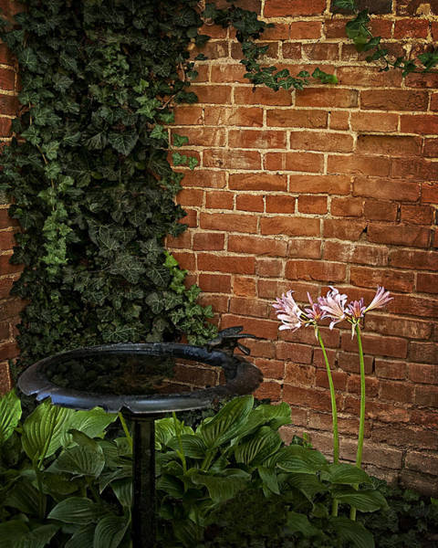 Surprise Lily Photograph - Naked Ladies In The Garden Corner by Mitch Spence