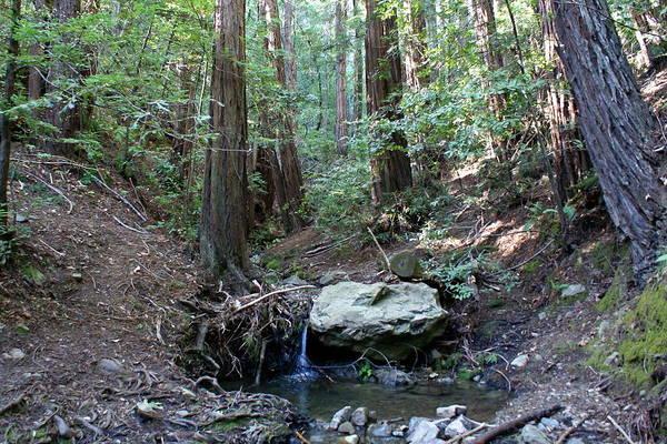 Photograph - Nancy Creek Aka Corte Madera Creek by Ben Upham III