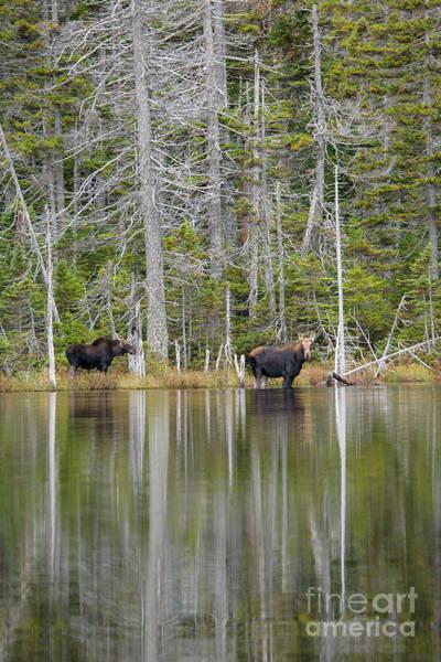 Photograph -  Nancy Pond - White Mountains New Hampshire Usa by Erin Paul Donovan