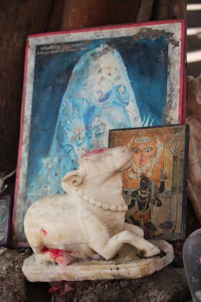 Wall Art - Photograph - Nandi, Haridwar by Jennifer Mazzucco