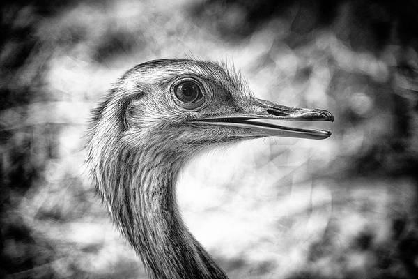 Photograph - Nandu by Traven Milovich