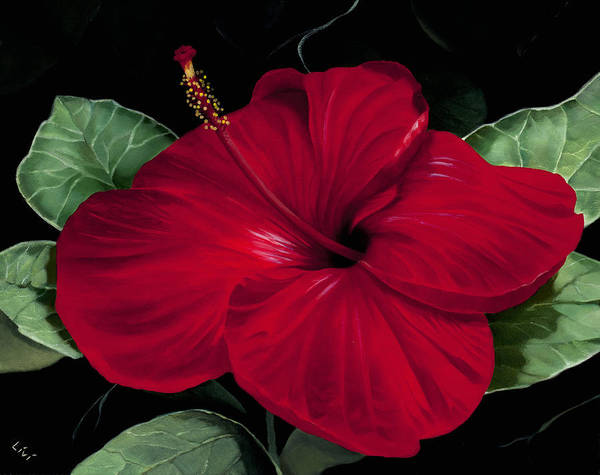 Hibiscus Flower Painting - Nan's Hibiscus by Carol Livingston