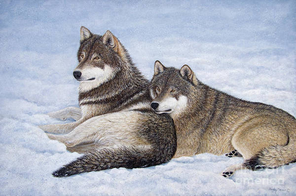 Arctic Wolf Painting - Nap Interrupted by Sandy Moser