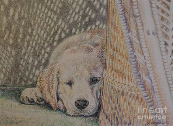 Golden Retriever Drawing - Nap Time by Gail Dolphin