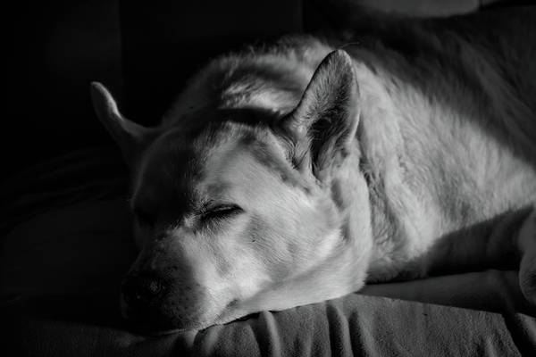 Photograph - Nap Time by Guy Whiteley