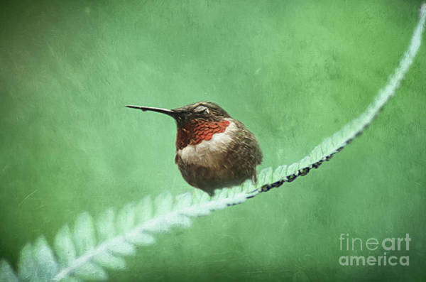 Wall Art - Photograph - Nap Time Hummer by Darren Fisher